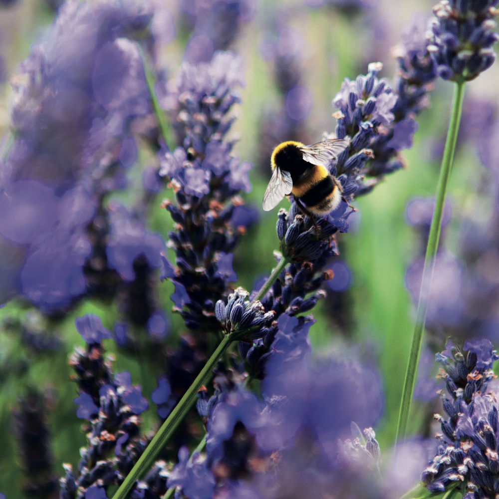 Soil Association and bees